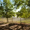Tree-lined Fence - White Fence