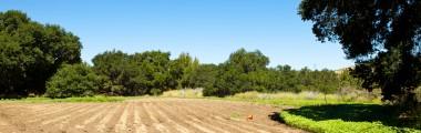 Plateau Meadow - Crops - Soil - Sunflowers - Open - Sunlight